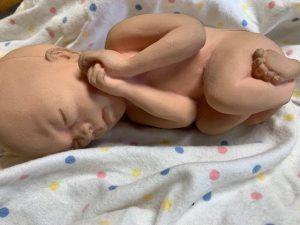 24 weeks fetal model